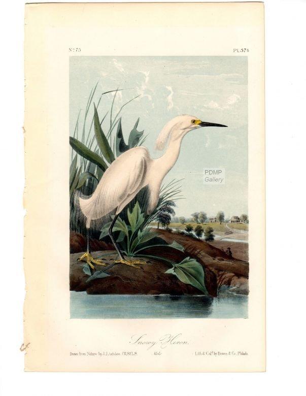 J.J. Audubon. Octavo. Snowy Heron No.374