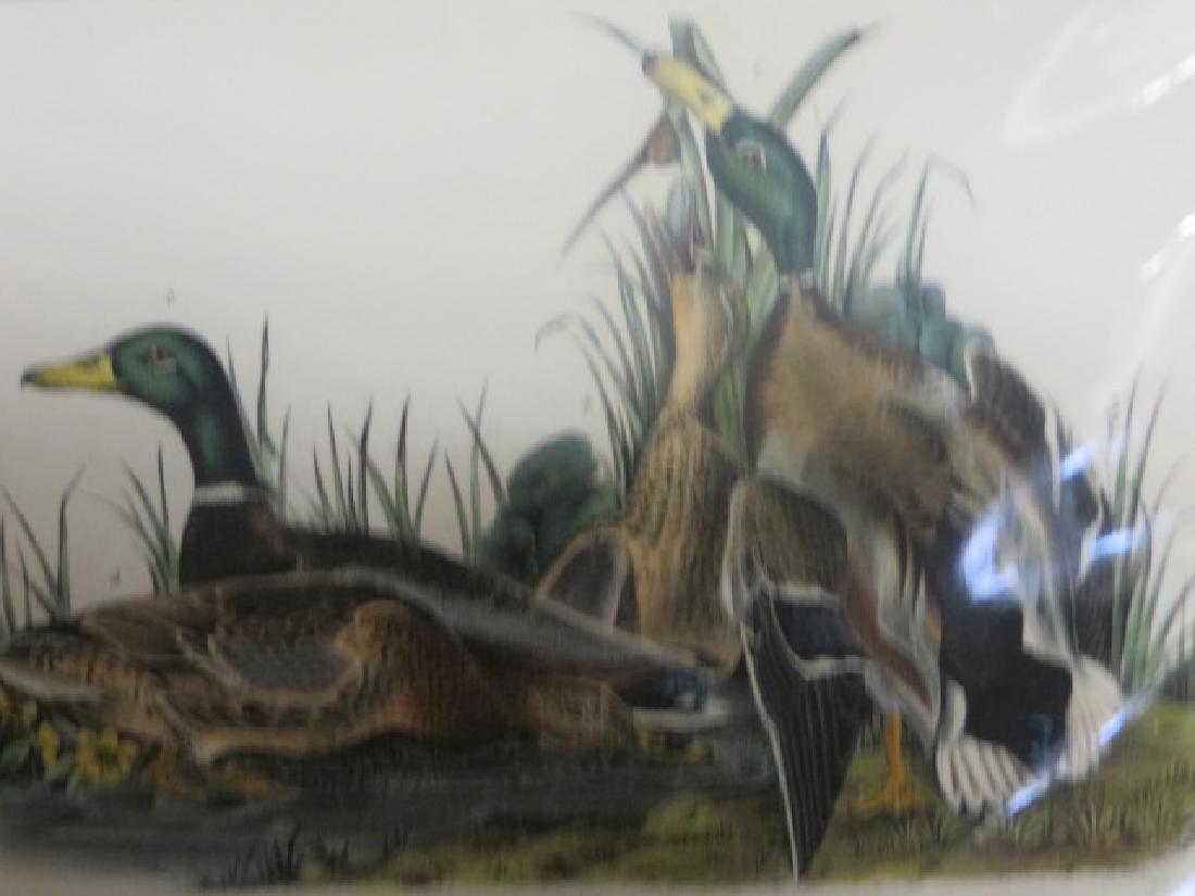 J.J. Audubon. Octavo. Mallard Duck No.385