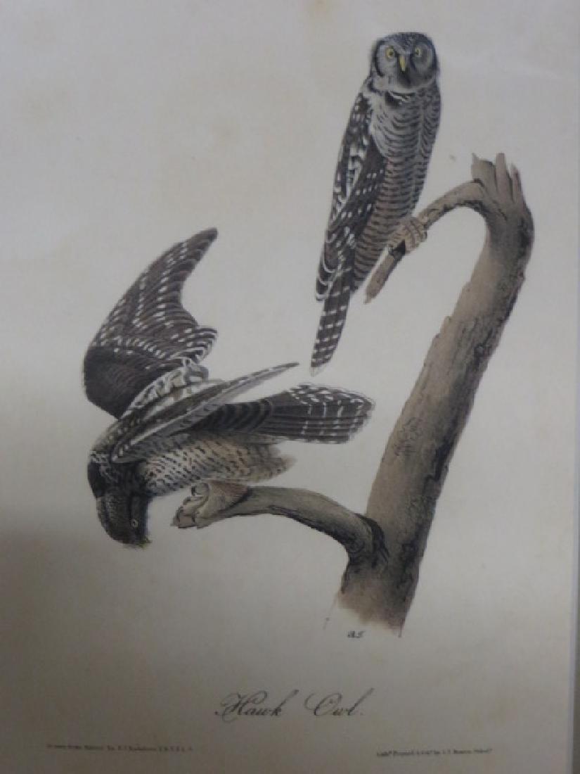 J.J. Audubon. Octavo. Hawk Owl No.27