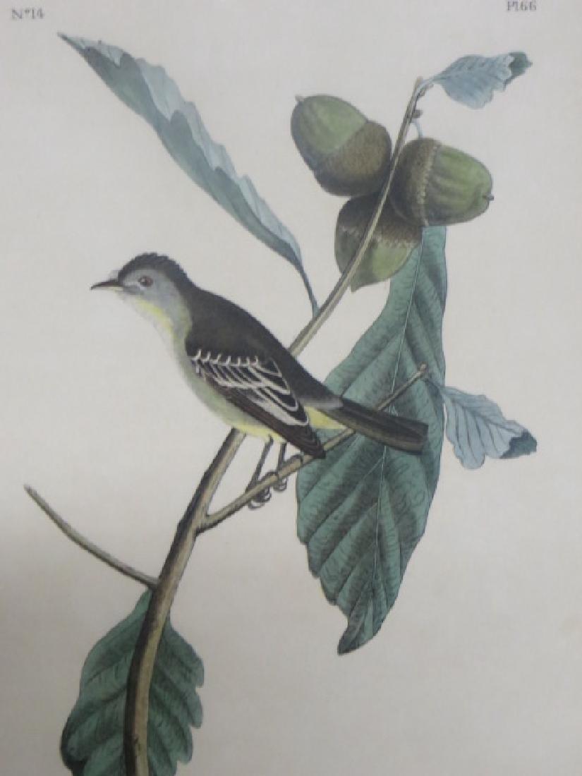 J.J. Audubon. Octavo. Least Pewee Flycatcher No.66