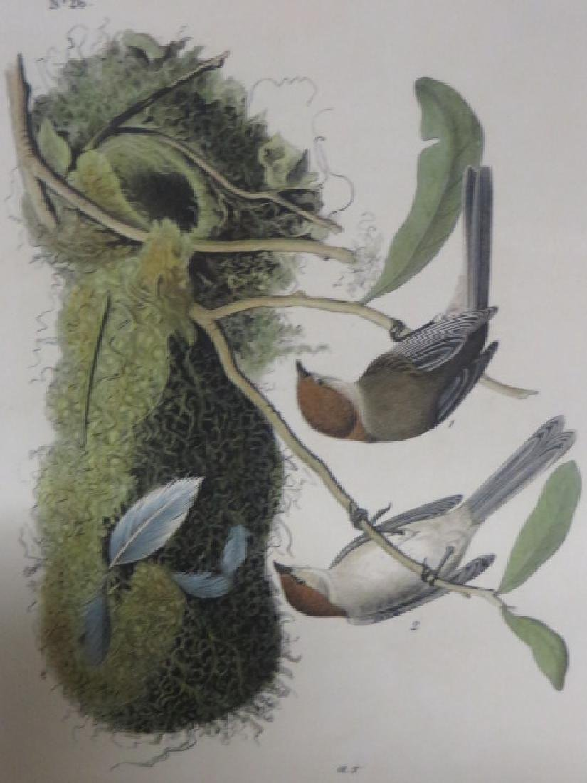J.J. Audubon. Octavo. Chestnut-Crowned Titmouse No.130