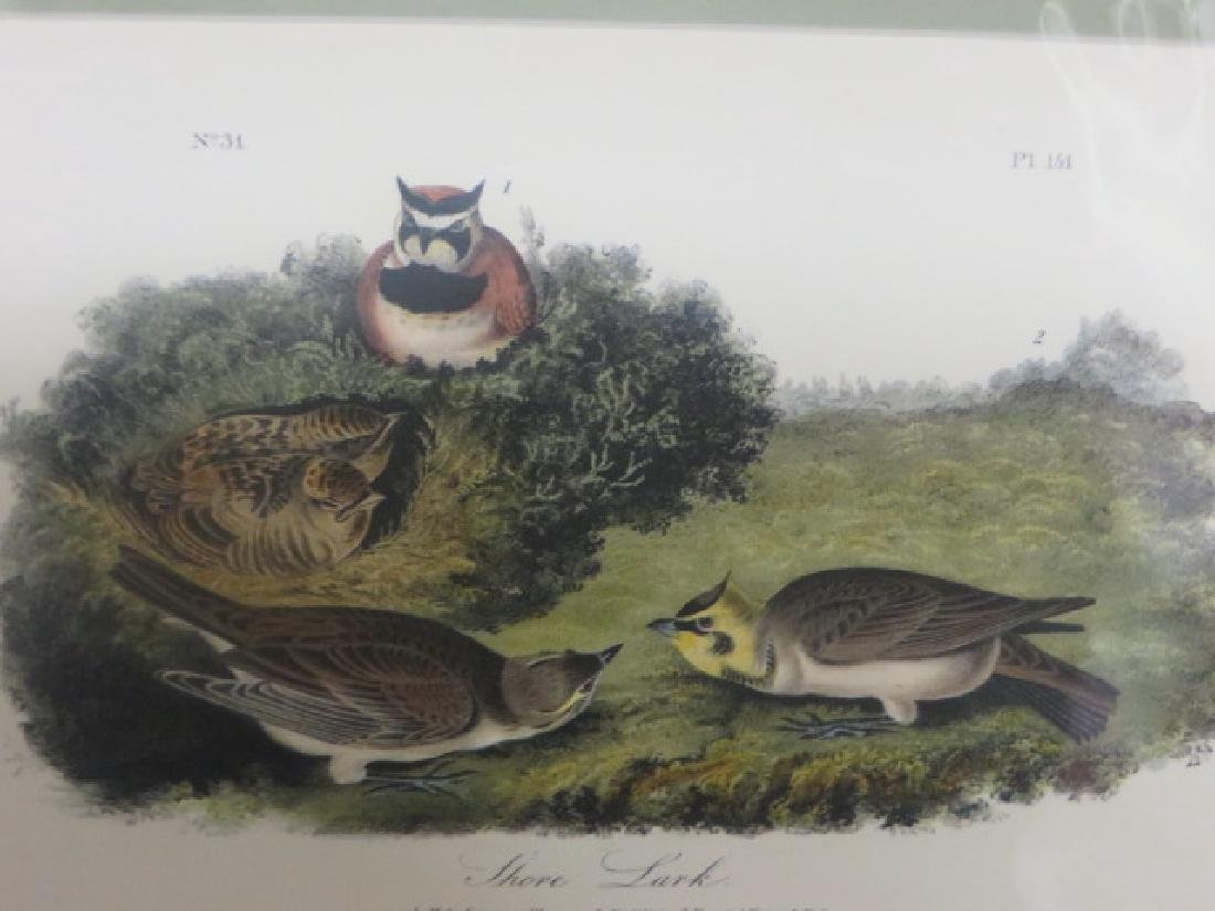 J.J. Audubon. Octavo. Shore Lark No.151