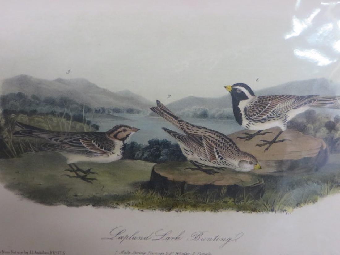 J.J. Audubon. Octavo. Lapland Lark Bunting No.152