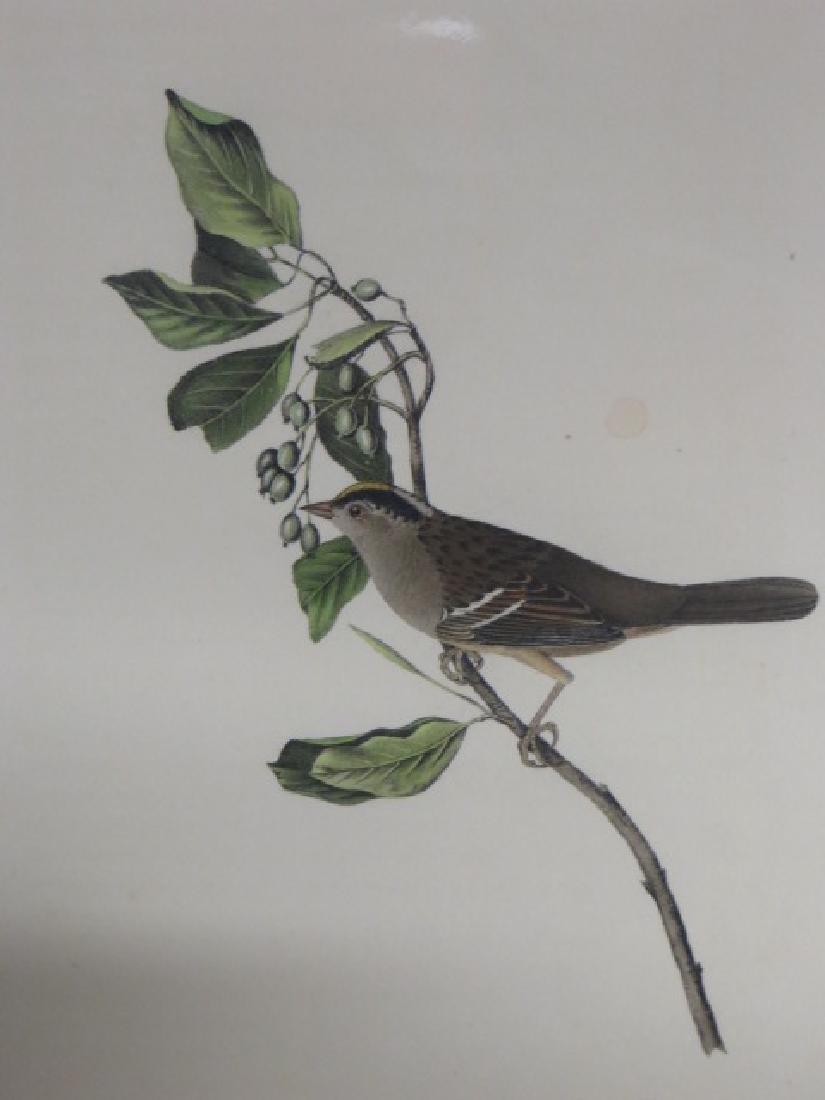 J.J. Audubon. Octavo. Black & Yellow Crowned Finch