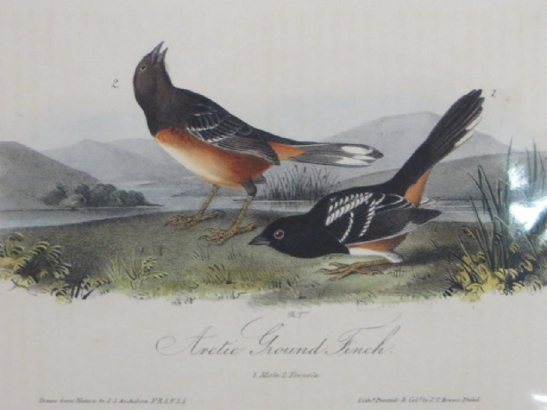 J.J. Audubon. Octavo. Arctic Ground Finch No.194