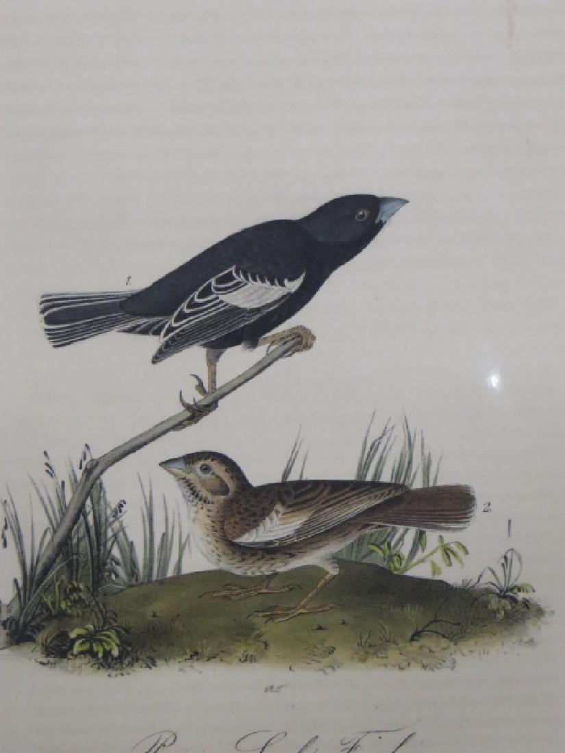 J.J. Audubon. Octavo. Prairie Lark Finch No.202
