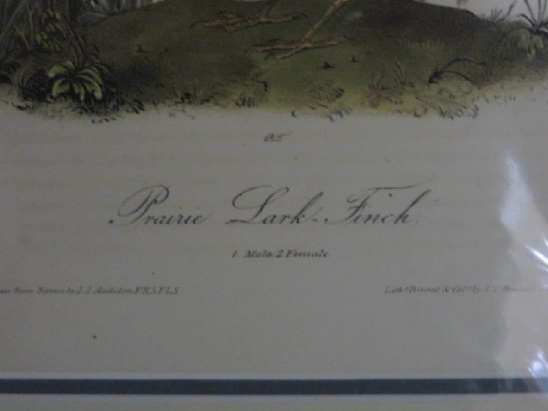 J.J. Audubon. Octavo. Prairie Lark Finch No.202 - 2