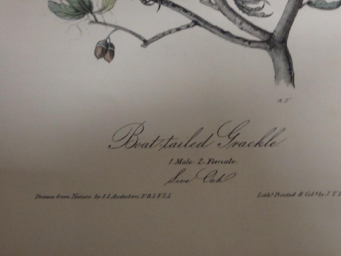 J.J. Audubon. Octavo. Boat Tailed Grackle No.220 - 2