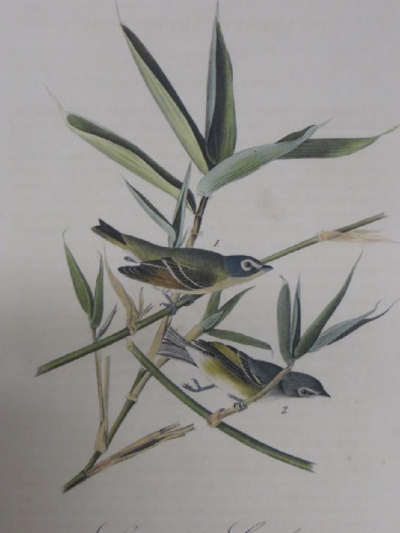 J.J. Audubon. Octavo. Tolitary Vire or Greenlet No.239
