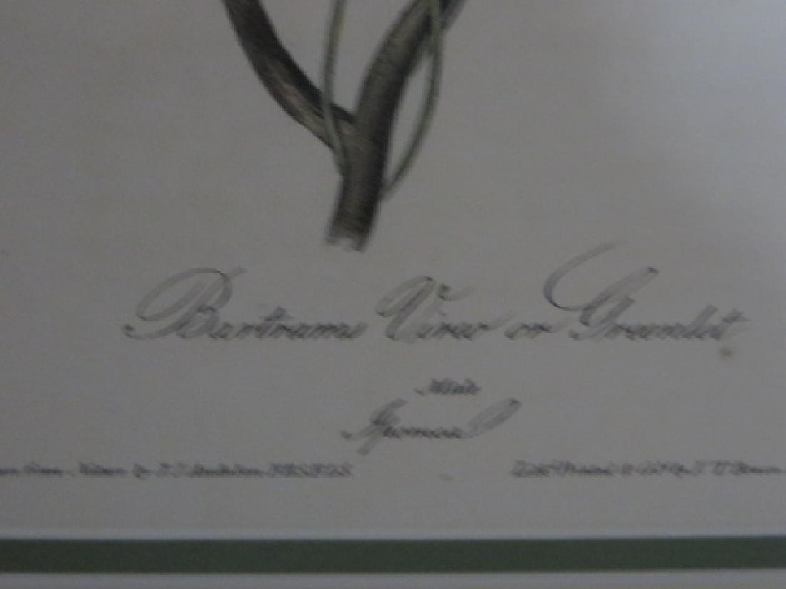 J.J. Audubon. Octavo. Bartrams Vireo or Greenlet No.242 - 2