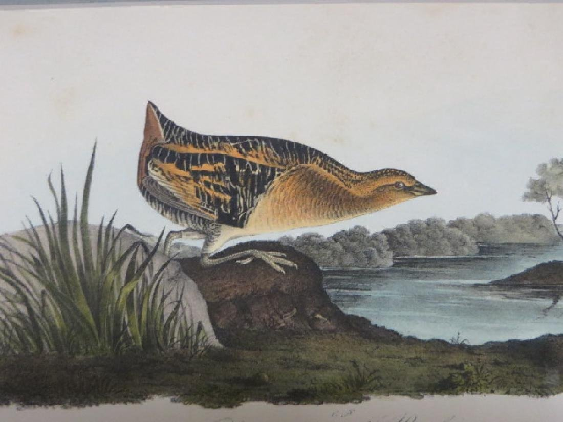 J.J. Audubon. Octavo. Yellow-Breasted Rail No.307