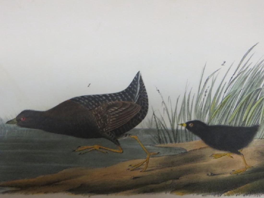 J.J. Audubon. Octavo. Least Water Rail No.308