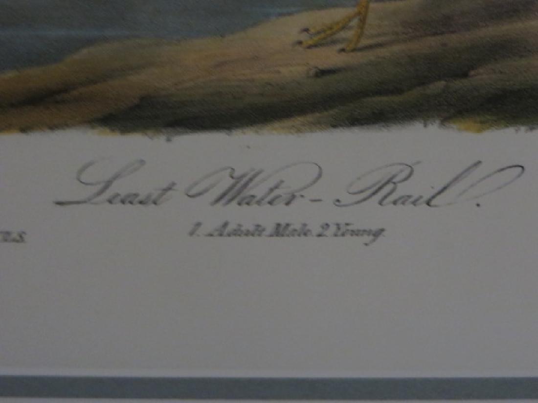 J.J. Audubon. Octavo. Least Water Rail No.308 - 2