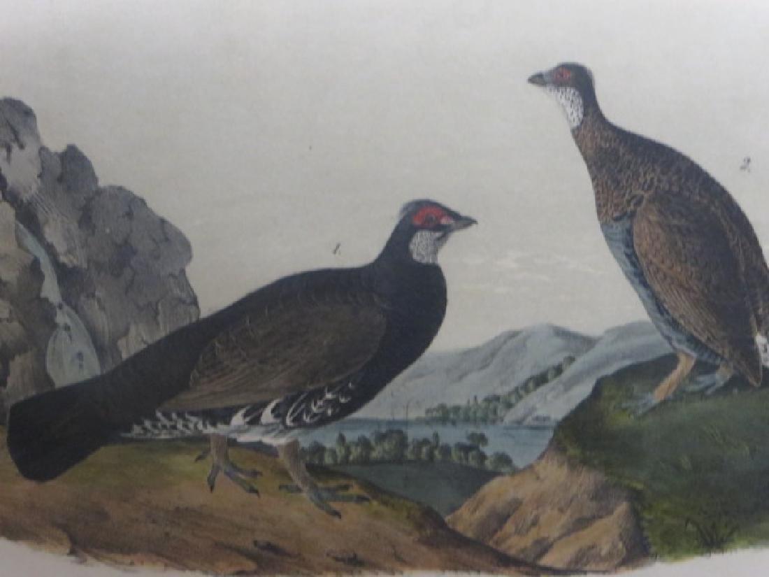 J.J. Audubon. Octavo. Dusky Grouse No.295