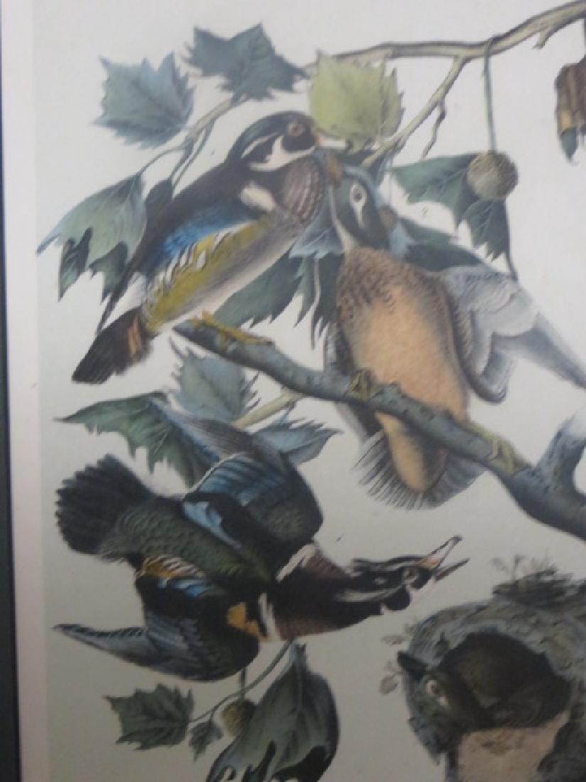 J.J. Audubon. Octavo. Wood Duck No.391