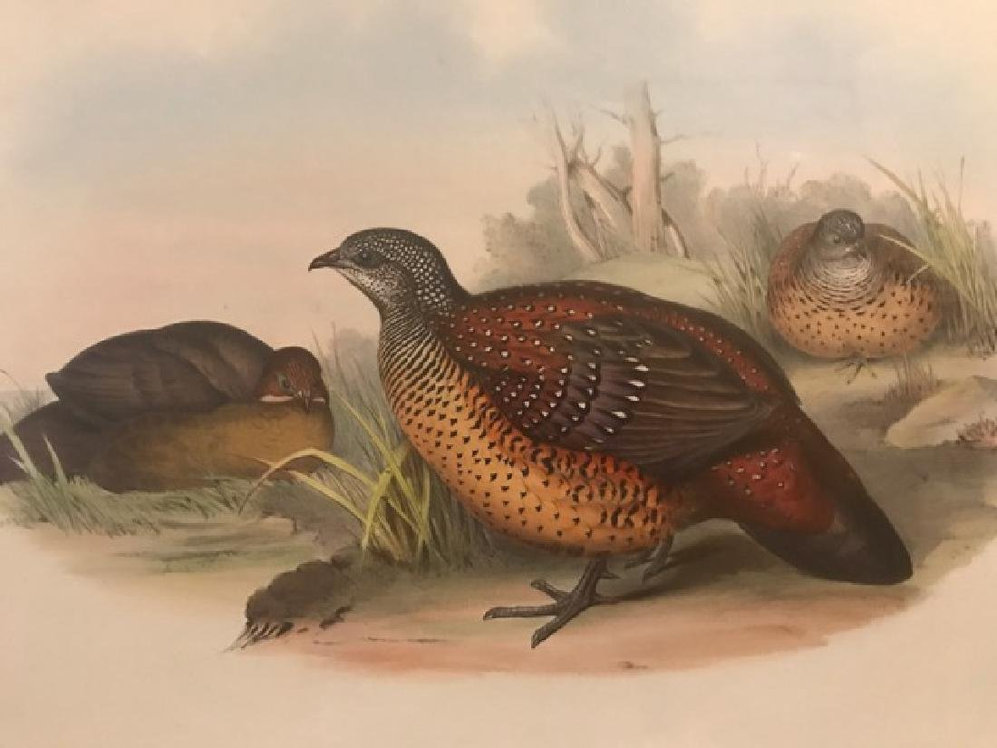 J. Gould Lithograph: Painted Spur-Fowl - 3