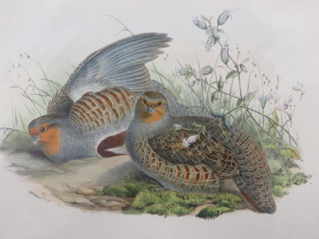 J. Gould Lithograph: Partridge