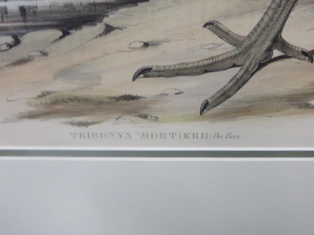J. Gould Lithograph: Australian Native Hen - 2