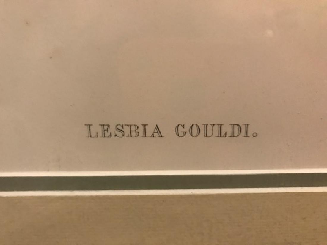 J. Gould Lithograph: Bogota Train-Bearer - 2