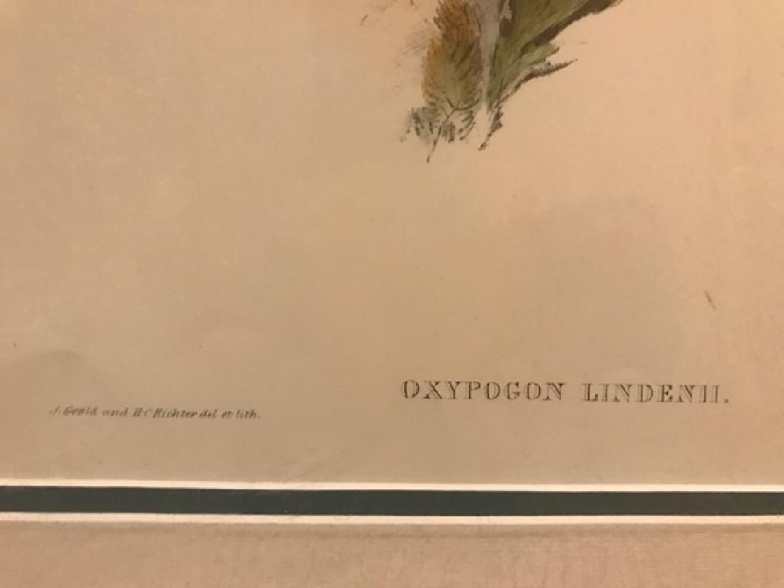 J. Gould Lithograph: Lindens Helmet Crest - 2