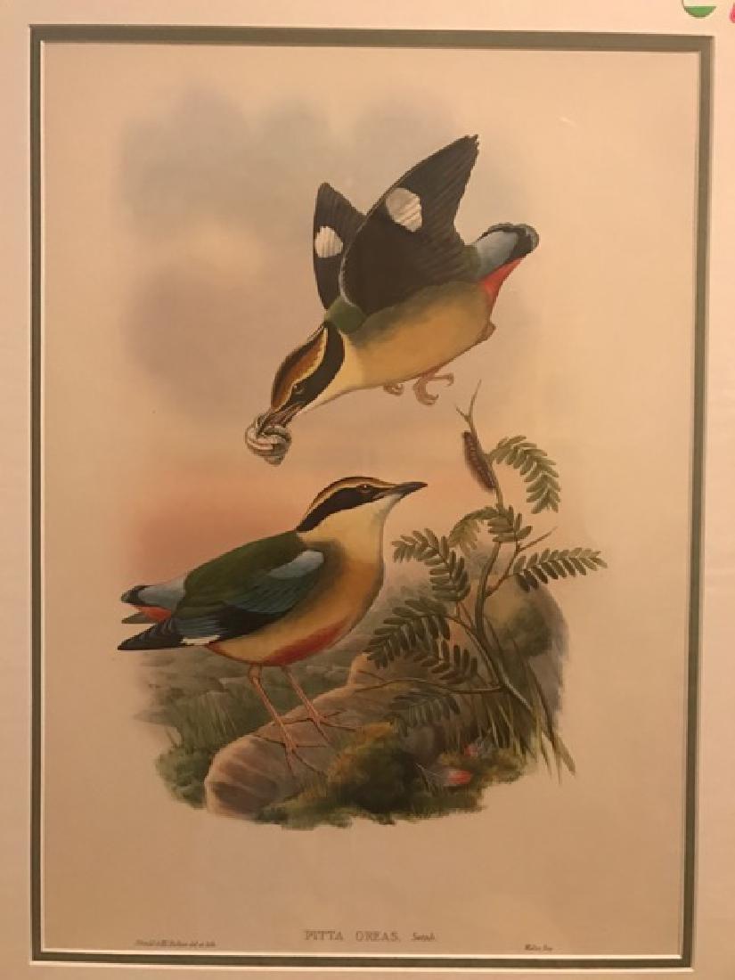 J. Gould Lithograph: Waxen Chatterer