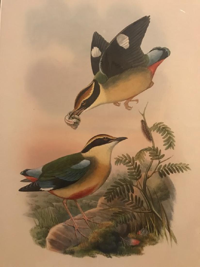 J. Gould Lithograph: Waxen Chatterer - 3