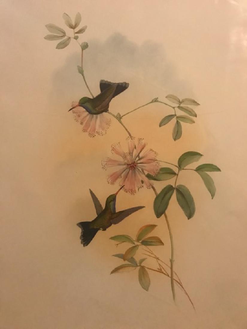 J. Gould Lithograph: Doubledays Humming-Bird - 3