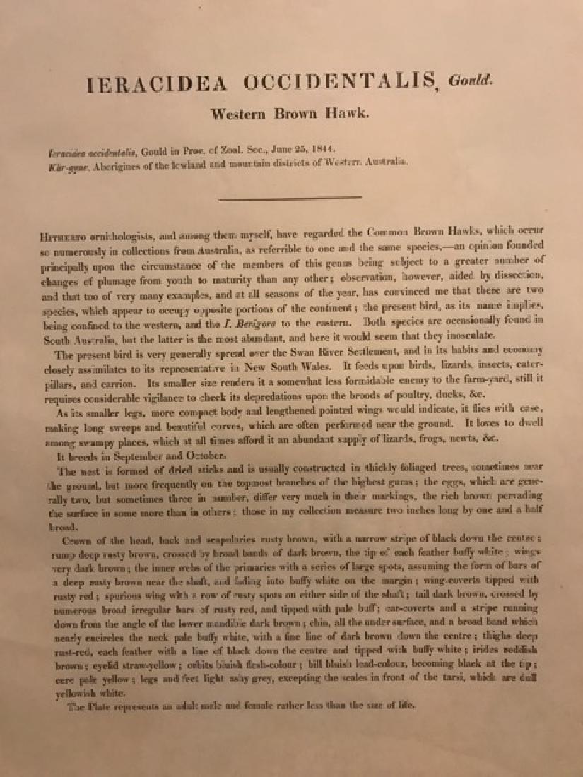 J. Gould Lithograph: Western Brown Hawk - 4