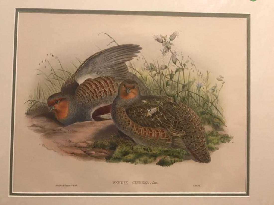 J. Gould Lithograph: Grey Partridge