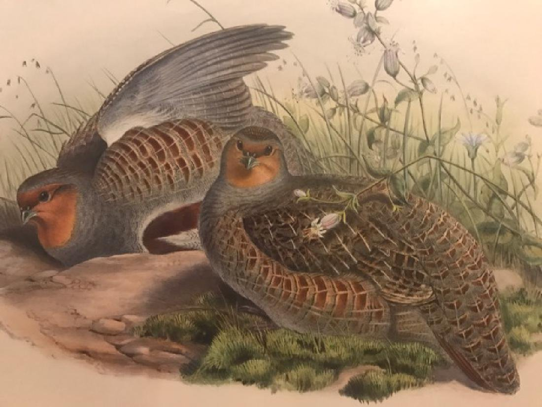 J. Gould Lithograph: Grey Partridge - 3