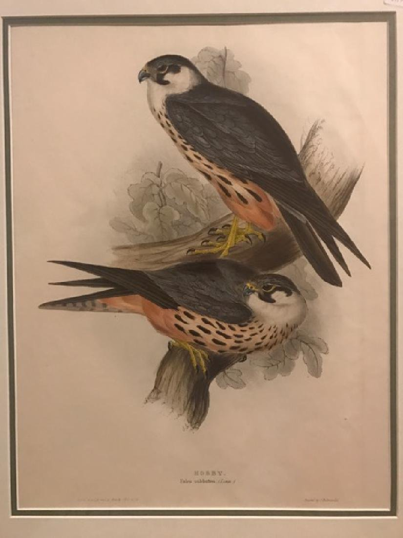 J. Gould Lithograph: Hobby