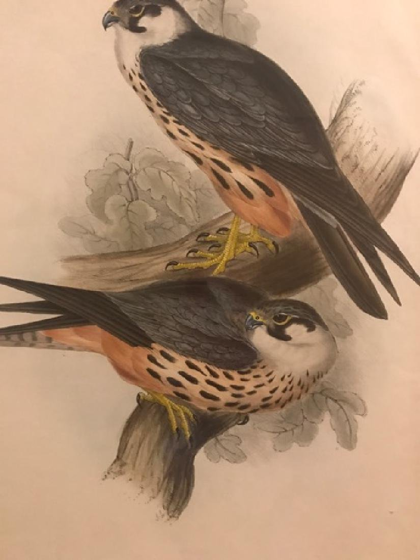 J. Gould Lithograph: Hobby - 3