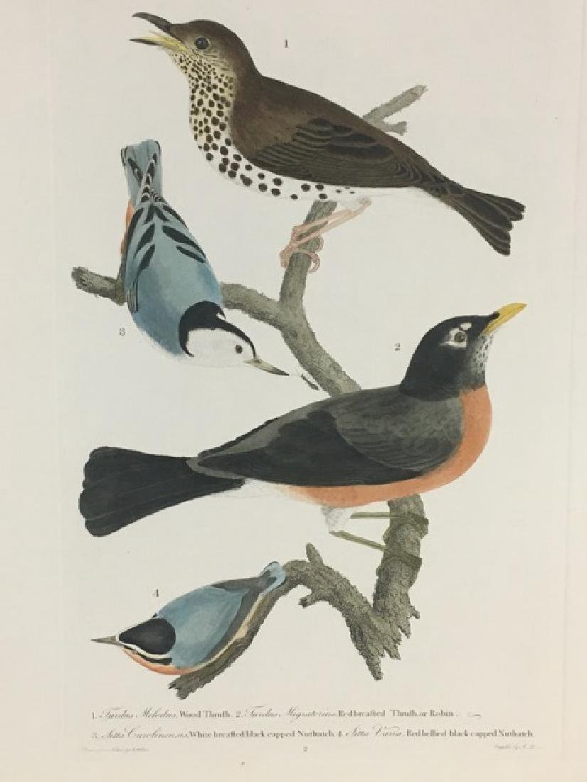 Alexander Wilson. Wood Thrush, Robin, Nuthatches