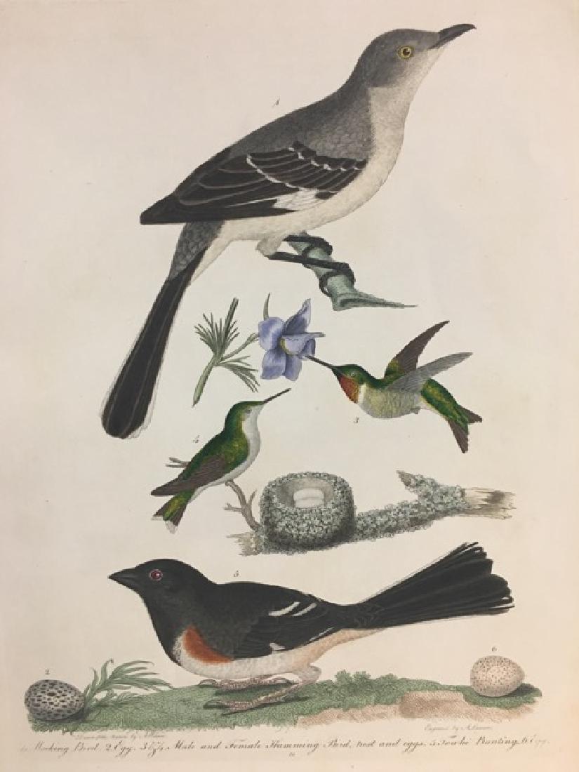 Alexander Wilson. Mocking Bird, Humming Bird, Towhe and