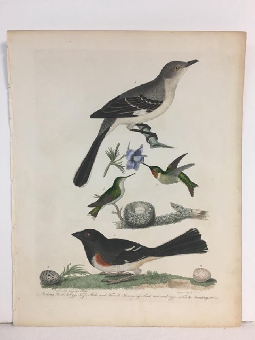 Alexander Wilson. Mocking Bird, Humming Bird, Towhe and - 2