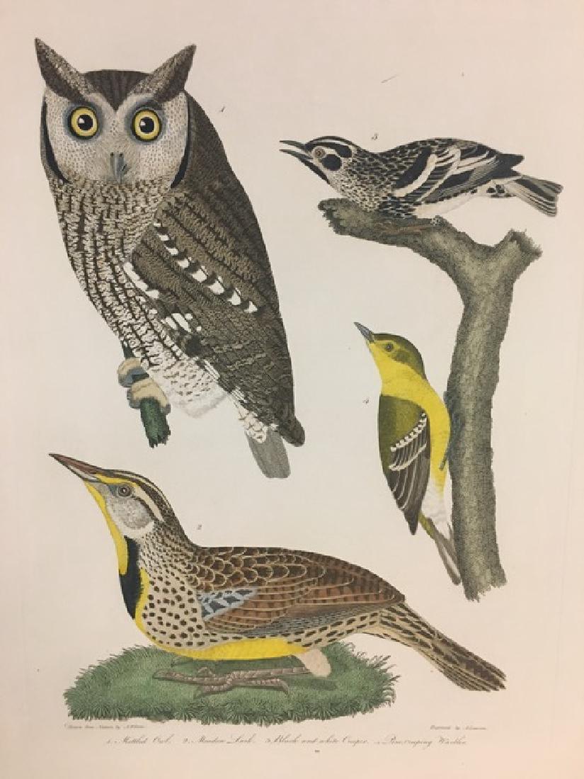 Alexander Wilson. Mottled Owl, Meadow Lark