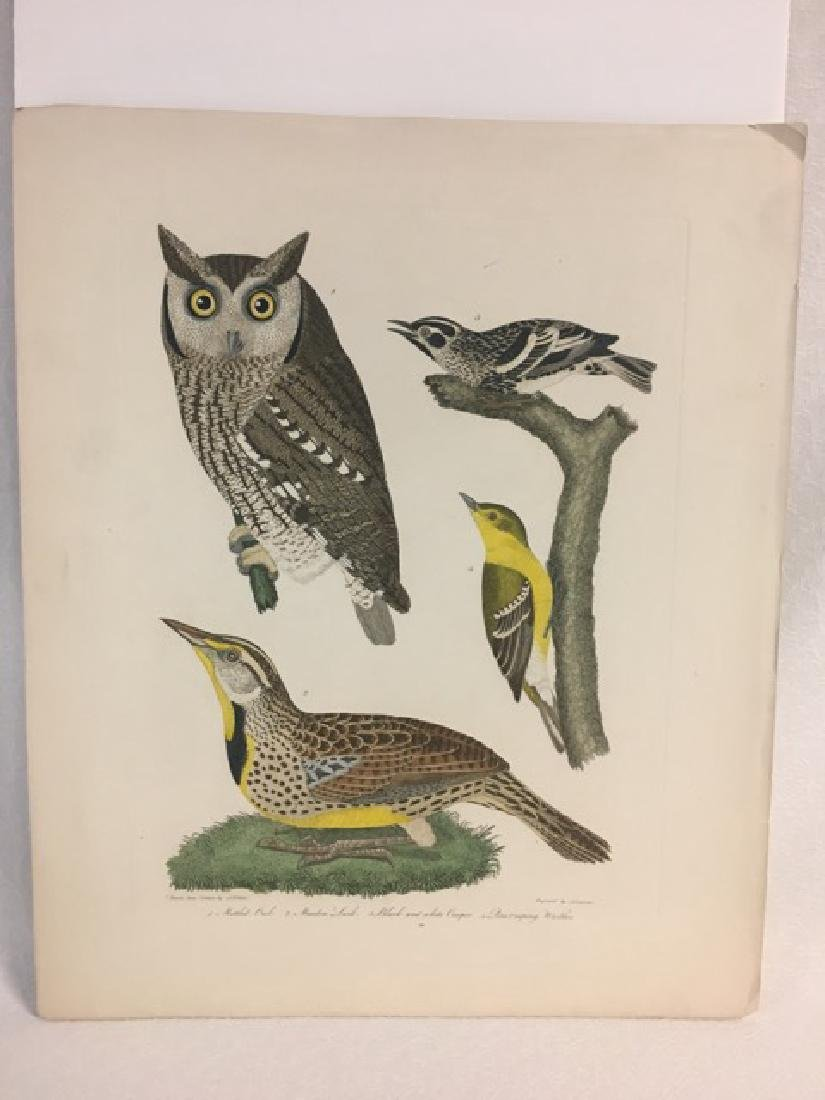 Alexander Wilson. Mottled Owl, Meadow Lark - 2