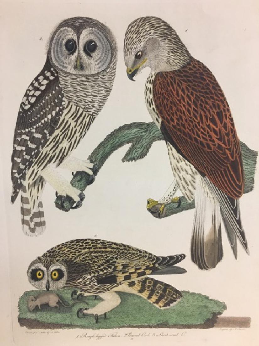 Alexander Wilson. Rough Legged Falcon, Barred Owl