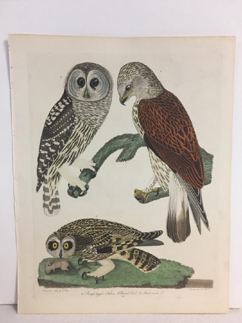 Alexander Wilson. Rough Legged Falcon, Barred Owl - 2