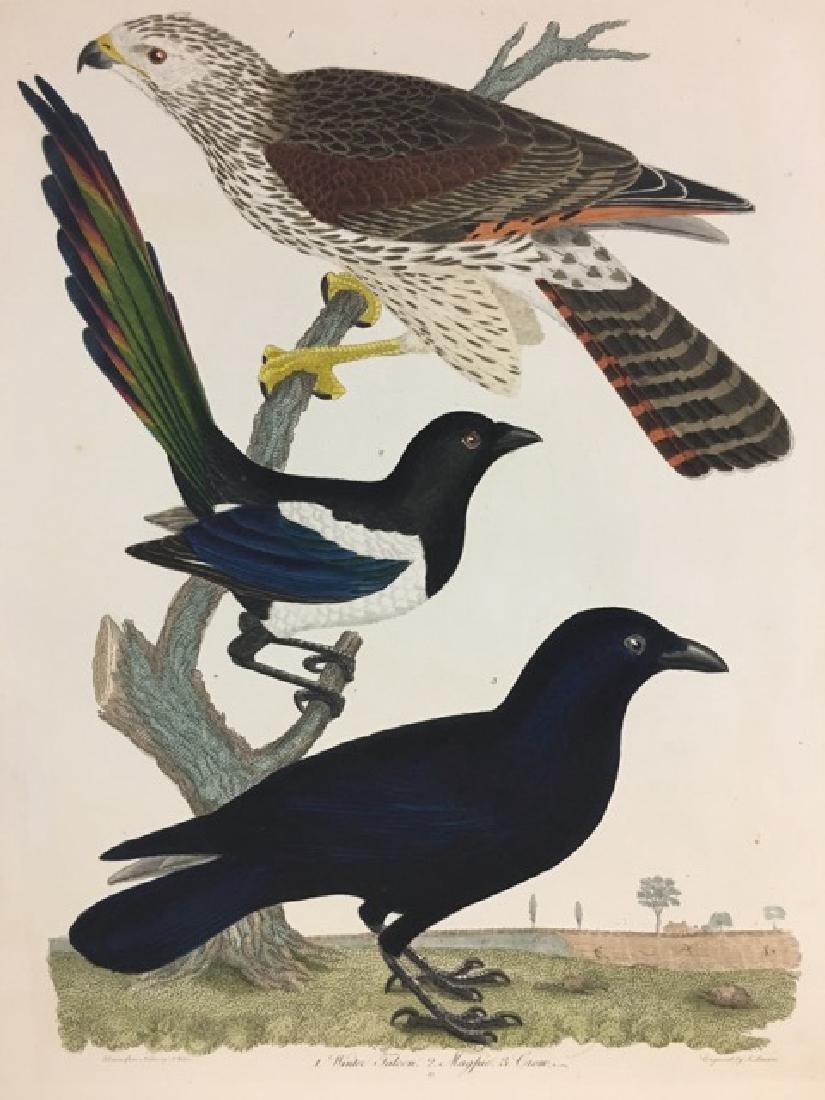 Alexander Wilson. Winter Falcon, Magpie, Crow