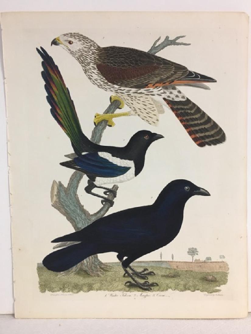 Alexander Wilson. Winter Falcon, Magpie, Crow - 2