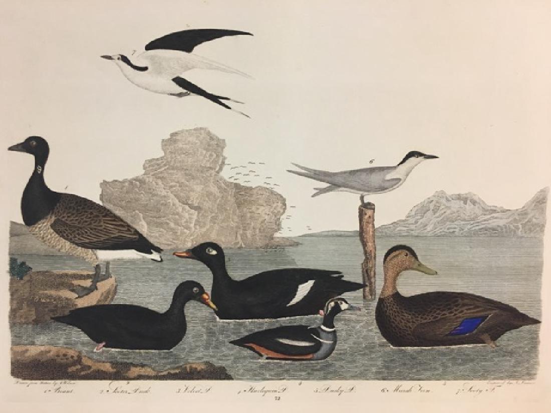 Alexander Wilson. Brant, Scoter Duck, Harlequin Duck