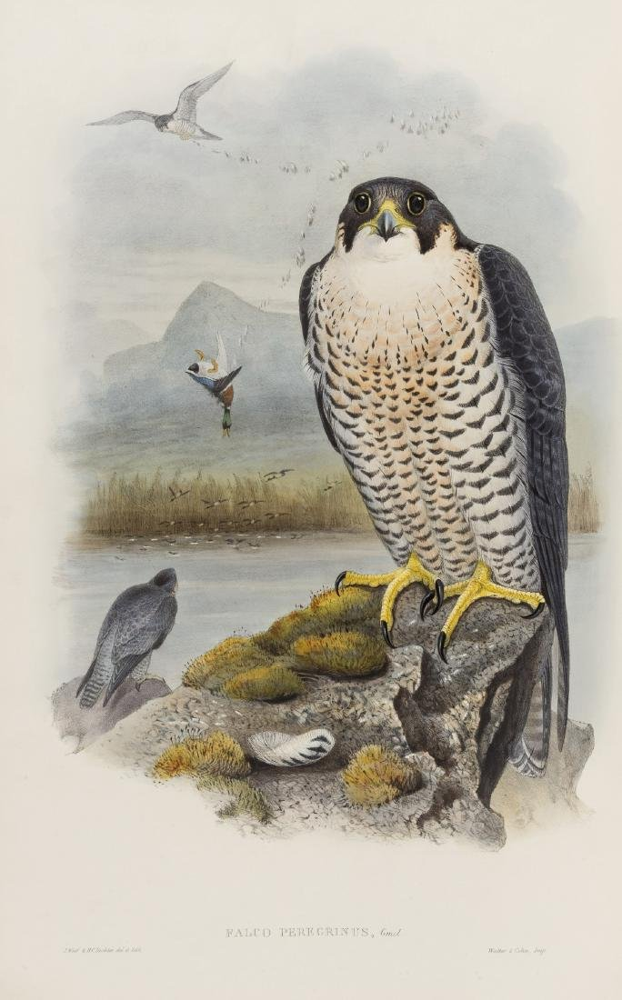 Birds.- Gould (John) The Birds of Great Britain, 5