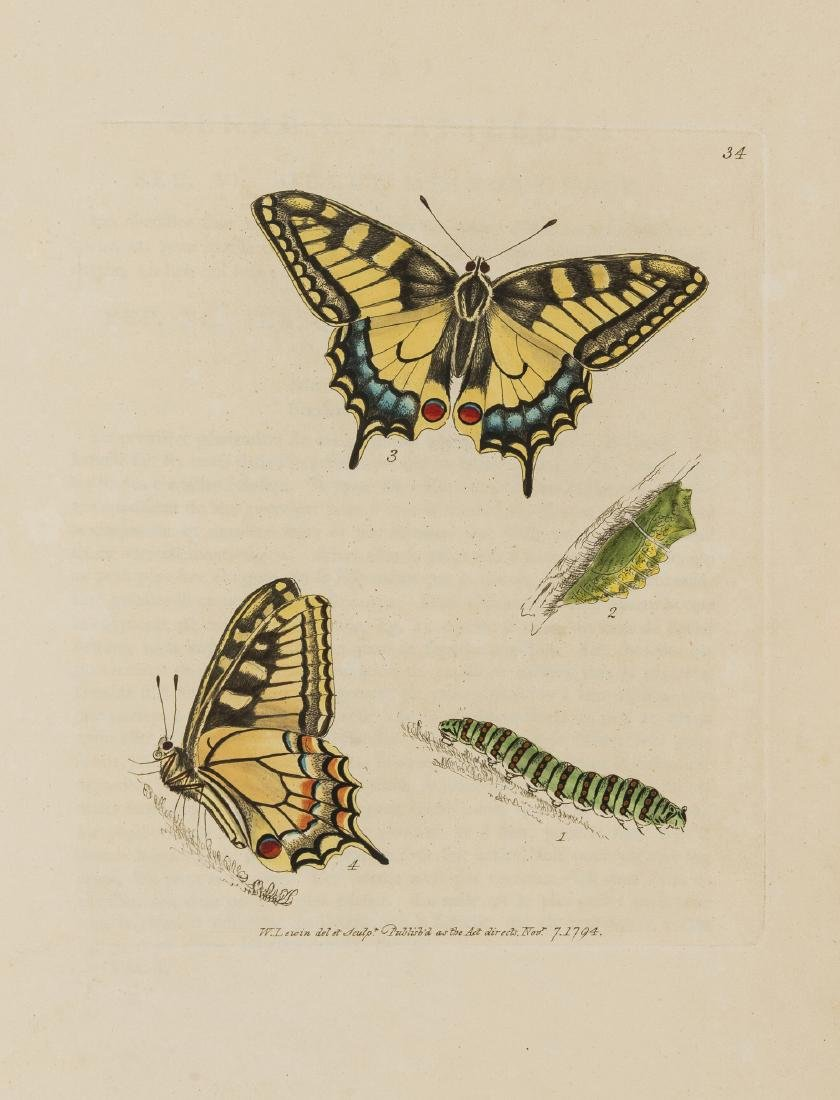 Butterflies.- Lewin (William) The Insects of Great