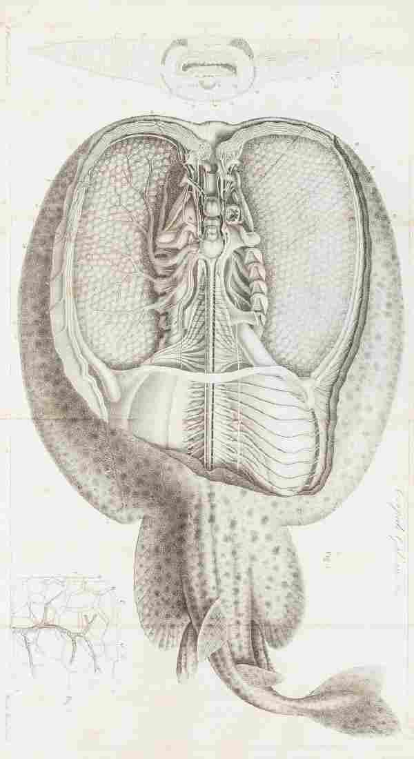 Electrophysiology.- Matteucci (Carlo) Traité des