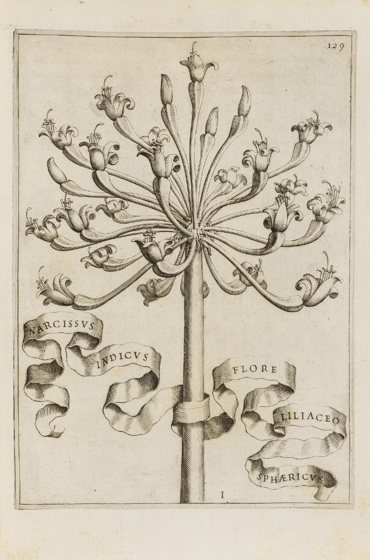 Ferrari (Giovani Battista) Flora sive flora cultura,