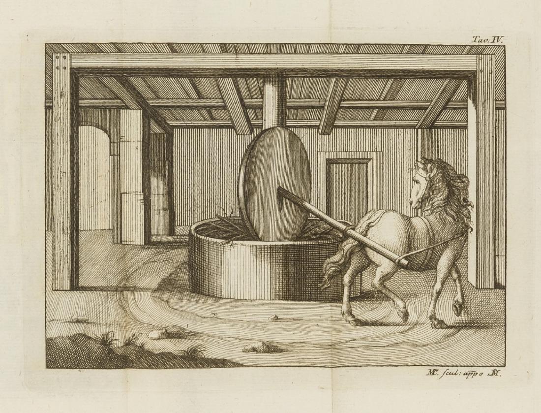Mariti (Giovanni) Della Robbia; sua Coltivazione e suoi