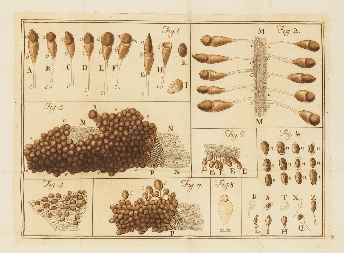 Cereals.- [Tozzetti (Giovanni Targioni) & others.]