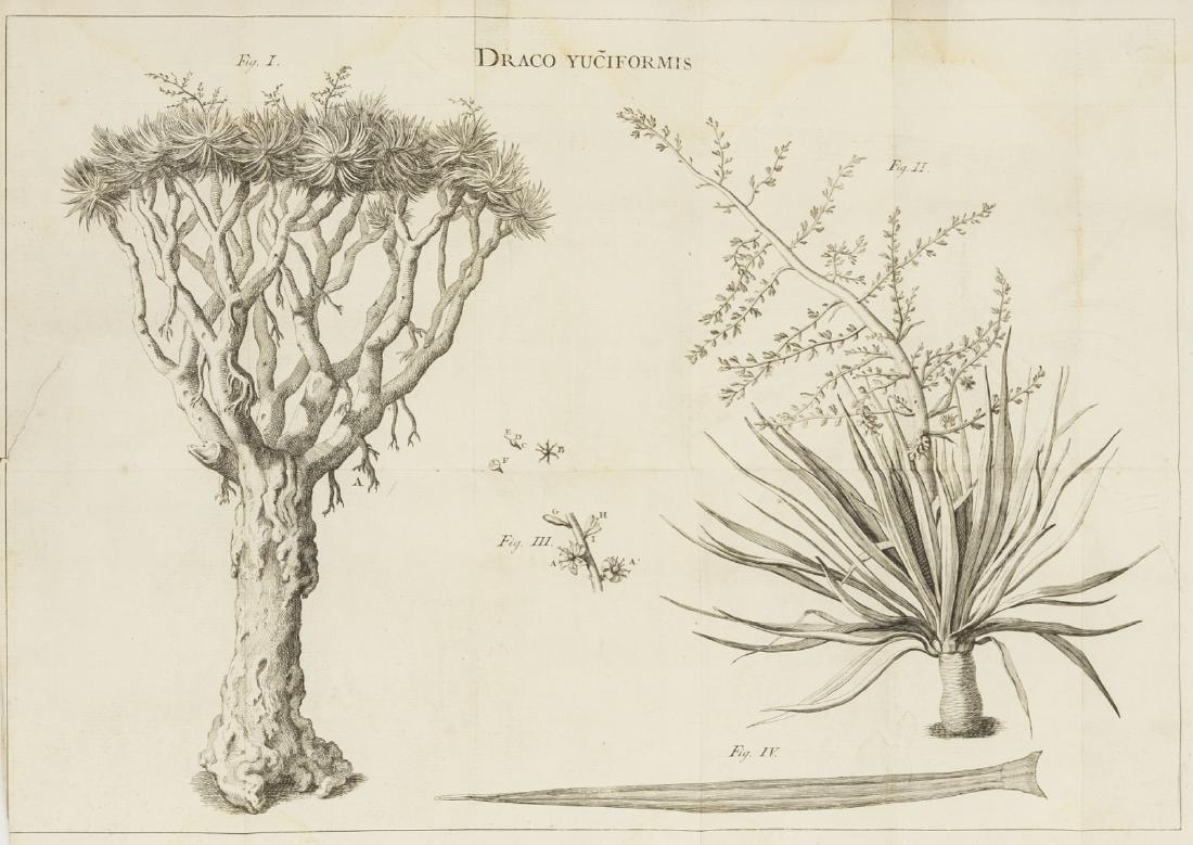 Botany.- Vandelli (Domenico) Dissertatio de arbore