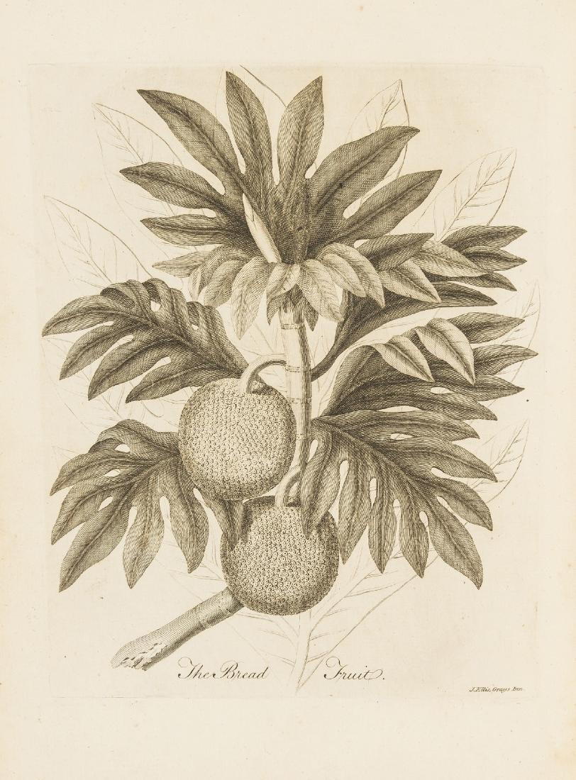 Ellis (John) A Description of the Mangostan and the